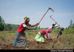 Self Help Groups, Rwanda. September 2013. Tearfund Partner AEE Rwanda (African Evangelistic Enterprise). General views Kayonza district, Eastern Region. Preparing the land for planting sorghum. Photo: Eleanor Bentall/Tearfund